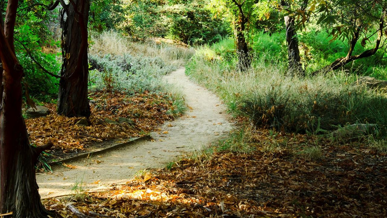 meandering path in UC Davis Arboretum. Trees and plants on both sides of path. The path is empty of people.